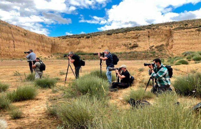 taller de fotografía con lobos PallantiaPhoto2021